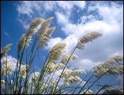 wind-469244_640
